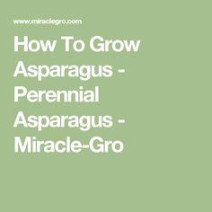 How To Grow Asparagus - Perennial Asparagus - Miracle-Gro