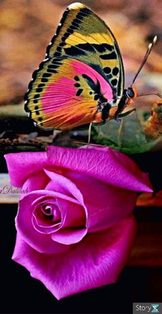 Beautiful Flowers Wallpapers, Beautiful Nature Wallpaper, Beautiful Flowers Garden, Beautiful Gif, Beautiful Butterflies, Amazing Flowers, Beautiful Roses, Nice Flower, Types Of Butterflies