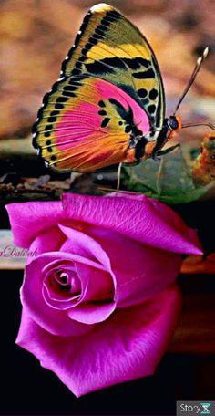 Beautiful Flowers Wallpapers, Beautiful Rose Flowers, Beautiful Nature Wallpaper, Beautiful Butterflies, Amazing Flowers, Beautiful Birds, Animals Beautiful, Beautiful Love Pictures, Beautiful Photos Of Nature