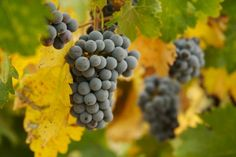 Best 5 Wine Tours to enjoy Autumn in Tuscany