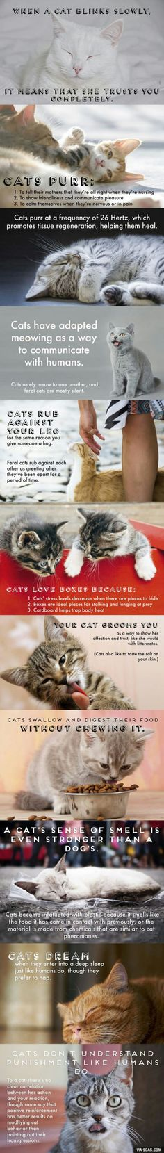 Facts about cats! Part 2