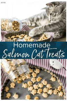 Homemade Cat Treats are super simple to make and super fun for your cat! Dill loves this 3 ingredient salmon cat treat recipe, and they were even featured in Family Circle Magazine. Dilly is famous now! And he seems to think these are the best cat treats ever.