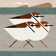 Scott Partridge - kentish plover - Bird Illustration - terra maris