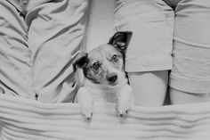 dog-baby-photos-snuggles-count-it-joy-jamie-clauss-19