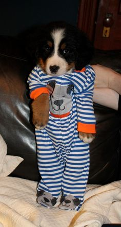 9 Insanely Adorable Puppies in Pajamas. You're Welcome - Yaywire Puppies In Pajamas, Cute Baby Puppies, Puppies And Kitties, Puppies Puppies, Doggies, Baby Animals, Funny Animals, Cute Animals, Funny Dogs
