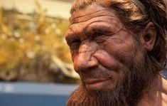 Neanderthals are generally classified by palaeontologists as the species Homo neanderthalensis, but some consider them to be a subspecies of Homo sapiens (Homo sapiens neanderthalensis). The first hum