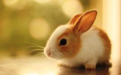 I would LOVE to keep a bunny in a garden if i had the extra time!