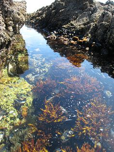 california tidepools | outsidelosangeles: Get lost in these tide pools (Portugues Bend, Palos ...