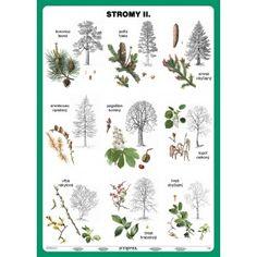 Stromy II. diel