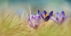 spring is here :-)! by Sonja Probst on 500px