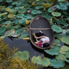 Viet Ha Tran - The Lotus Lake V   Oeuvre d'Art en Vente Artsper