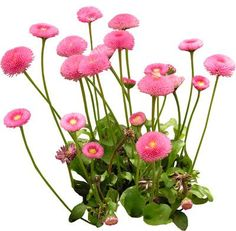 cutout flowers: flower