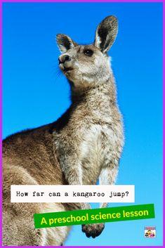 How for does a kangaroo jump preschool science lesson #preschool #sciencelesson #homeschooling #handsonlearning Science Curriculum, Preschool Science, Teaching Science, Science Activities, Science Projects, Science Fun, Biology Lessons, Science Lessons, Kangaroo Jumps