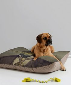 Terry Fan Sir Yoda Pet Bed #zulily #zulilyfinds