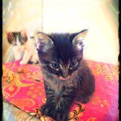 Yoqtel MoJito, mon cat