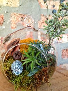 Green Man and Air Plant Moss Terrarium with by lovelyterrariums, $29.00