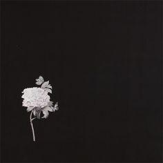 Satin sort med få store blomster