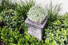 Foliage textures, focal points, variegated pittosporum