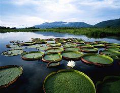 Pantanal (Brasil)