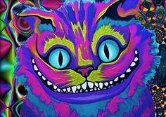 gatos flashero tumblr - Buscar con Google