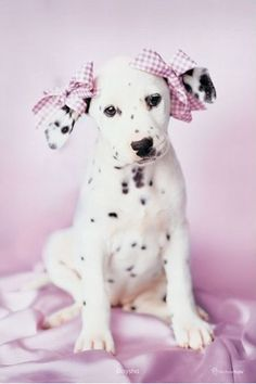 ribbons and bows...can you believe how cute this is???