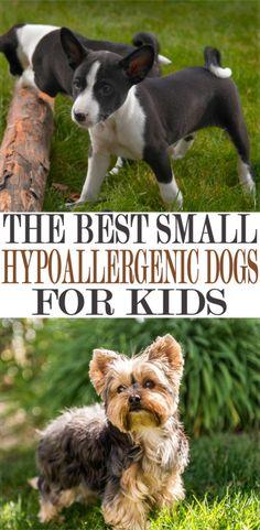 dog breeds little / dog breeds . dog breeds that dont shed . dog breeds list of . dog breeds little . dog breeds for apartments Best Small Dog Breeds, Best Small Dogs, Dog Breeds Little, Cute Small Dogs, Small Puppies, Cute Dogs, Dogs And Puppies, Smallest Dog Breeds, Small Puppy Breeds