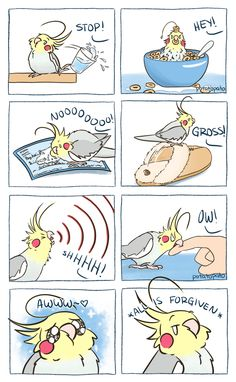 Good Photos Pet Birds comic Style If you share your daily life — and home — . : Good Photos Pet Birds comic Style If you share your daily life — and home — with a pet bird, containing mess and keeping the cage Animal Jokes, Funny Animal Memes, Funny Animal Pictures, Cute Funny Animals, Funny Relatable Memes, Cute Baby Animals, Funny Cute, Funny Drawings, Cute Animal Drawings
