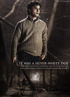 It was a silver-white doe.