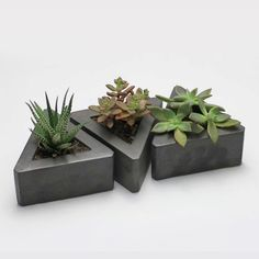 Triangle Concrete Pot Set by Rough Fusion. This set of three, handmade concrete triangular pots is perfect for displaying succulents. Place them separately them around a room or group them together to make an interesting centerpiece.  Available at Fairgoods: http://www.fairgoods.com/products/triangle-concrete-pot-set-of-3
