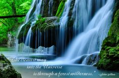 The clearest way into the Universe is through a forest wilderness. John Muir