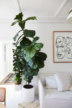 minimalist living room with an oversized fiddle leaf fig 454019206185159745 Living Room Decor, Bedroom Decor, Plants In Living Room, Room With Plants, Living Rooms, Living Spaces, Scandi Chic, Garden Floor, Decoration Plante