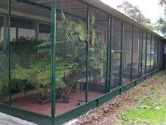 Multiple Bay enclosure, Custom Designed for the Zoo Diy Bird Cage, Bird Cage Stand, Chicken Coop Plans, Building A Chicken Coop, Cat Enclosure, Reptile Enclosure, Love Birds Pet, Pigeon Cage, Garden Netting