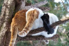 Three brothers in a tree