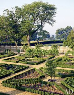 Boxwood-edged parterres define the kitchen garden old fashioned Potager Potager Garden, Veg Garden, Vegetable Gardening, Terraced Garden, Pallet Gardening, Sloping Garden, Veggie Gardens, Gardening Hacks, Garden Pond