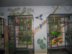 Pet room/ Bird room for my birds! need bigger windows.