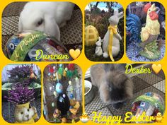 3/28/18 WISHING YOU ALL A HAPPY EASTER! The cat skin wasn´t available when we made this greeting for you, he´s as usual out looking for girls, mommy having a hard time getting him inside for bedtime at nights! We can´t understand why she bothers! Thihihihihi! Have a wonderful Easter Holiday everybody! BunnyKisses from D&D :)
