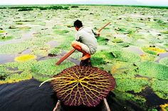 Loktak Lake : The only floating lake in the world
