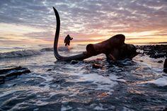 Tusk and Sunset: A mammoth's tusk spikes the Siberian sky on Bolshoy Lyakhovskiy Island. By Evgenia Arbugaeva