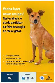 BONDE DA BARDOT: Comissão de defesa dos animais da Alerj participa de campanha contra o abandono, neste sábado (23/01)