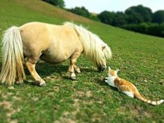 15 ponies that are so small you might mistake them for dogs - Horse & Hound All The Pretty Horses, Beautiful Horses, Animals Beautiful, Cute Animals, Orange Kittens, Mini Pony, Horse Crafts, Cat Boarding, Cat Love
