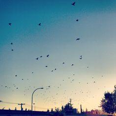 Birds in flight Birds In Flight, Clouds, Pictures, Outdoor, Photos, Outdoors, Flying Birds, Outdoor Games, Outdoor Living