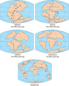 Gondwana was an ancient supercontinent that broke up about 180 million years ago. The continent eventually split into landmasses we recognize today: Africa, South America, Australia, Antarctica, the Indian subcontinent and the Arabian Peninsula...