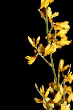 Yellow flowers©EvasioniCreative2013