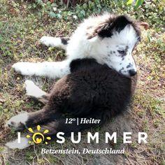 #Finlay #bordercollie #collie #dogs #Hund #Welpe #Puppies #Puppy #dogstagram #dogsofinstagram #loved #adorable #beautiful #cute #puppy #dog #bordercolliesofinstagram #borderfame