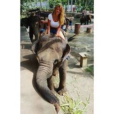 Bali Elephant Safari   Instagram Photos and Videos   instidy.com - Instagram Online Viewer