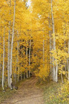 Yellow Leaf Road Photograph by Ernie Echols