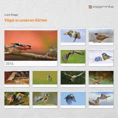"Lutz Klapp - #Motivkalender ""Vögel in unseren Gärten"" | www.viaprinto.de/motivkalender#/voegel_in_unseren_gaerten Werbekalender, Kalender 2014, Motivkalender, Online drucken"