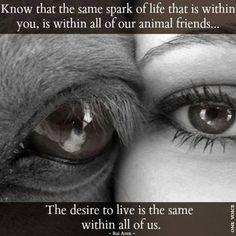 106 Beste Afbeeldingen Van Animal Quotes And Animals Lovers Quotes