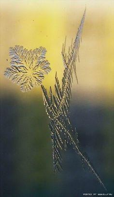 Зимние узоры (20 фото)