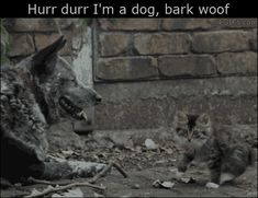 """""""Animal gifs with text on it? What does that even mean?"""" Here let me show you. - Imgur"""